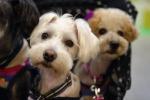 Carne di cane festival choc in Cina