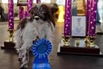 Ecco Peanut, il cane più brutto del mondo