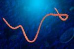 Contro il virus Ebola monitoraggio continuo