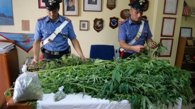 arresti, cannabis, cc corigliano, corigliano, droga, Sicilia, Archivio