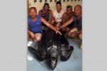 Tartaruga gigante a largo di Lampedusa