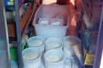 Sequestrati gregge di pecore e 400 kg di prodotti caseari