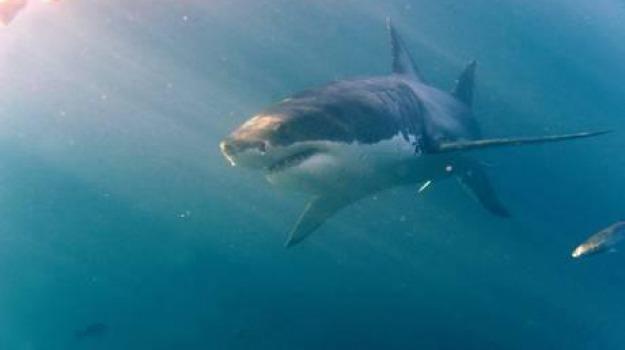 squalo, stretto di messina, Messina, Sicilia, Archivio