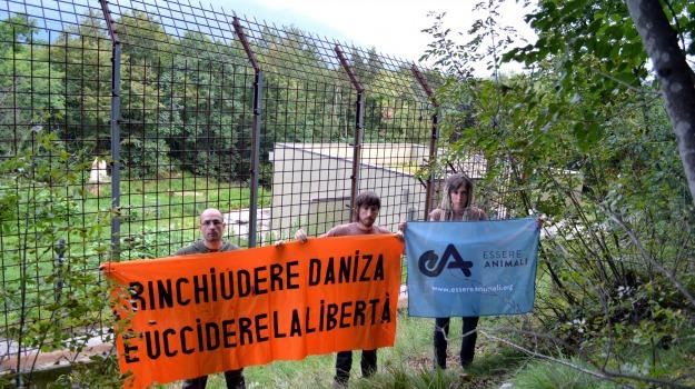 morta, orsa daniza, Sicilia, Archivio
