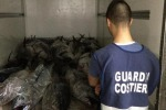 Capitaneria sequestra ben due tonnellate di tonno rosso