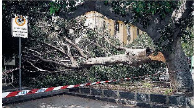 albero, Messina, Archivio