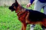 Bimba di tre anni sbranata dal suo cane