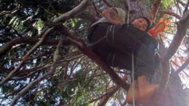 arrampicato su un albero, Sicilia, Archivio, Cronaca
