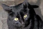Donna muore in casa Gatto dà l'allarme