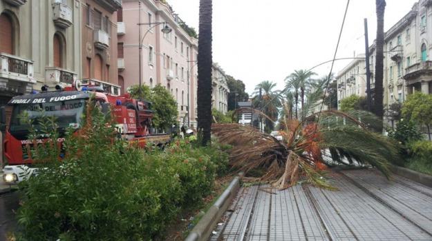palma, Messina, Archivio