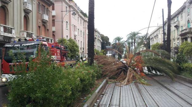 crollo palma, Messina, Archivio