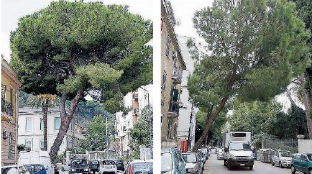 alberi, Messina, Archivio