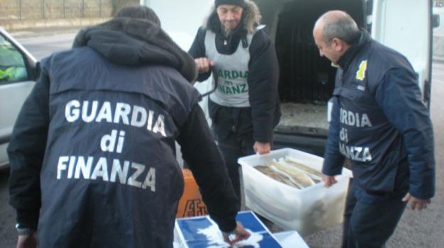guardia finanza, pesce, Cosenza, Calabria, Archivio