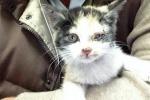 Brescia, chiusa la A4 Salvata una gattina