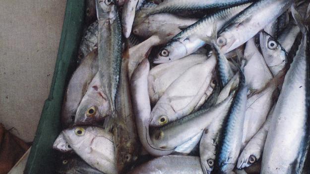 cattivo stato di conservazione, prodotti ittici, santa maria del cedro, Cosenza, Archivio
