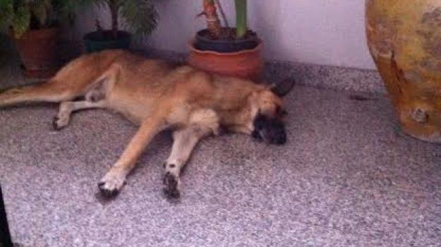angelo donnici, cane morto, intimidazione, mandatoriccio, Calabria, Archivio