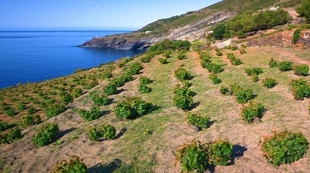 gambero rosso, vini siciliani, Sicilia, Archivio