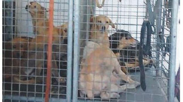 canile abusivo corigliano, Cosenza, Calabria, Cronaca