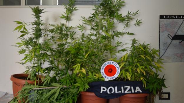 crotone, piantagione di marijuana, Catanzaro, Archivio