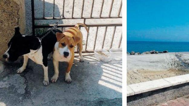 pitbull, Sicilia, Archivio