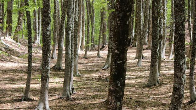 finanziamento protezione boschi, soldi boschi, Edy Bandiera, Nello Musumeci, Sicilia, Economia
