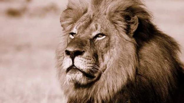 cecil, leone, ucciso, zimbabwe, Sicilia, Archivio, Cronaca