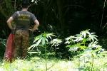 Scoperta piantagione cannabis