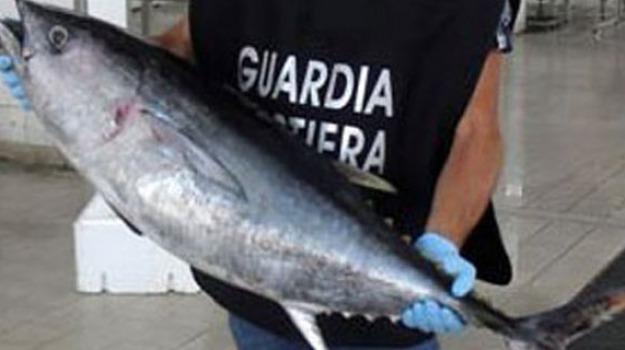 cetraro, guardia costiera, tonno rosso, Calabria, Archivio