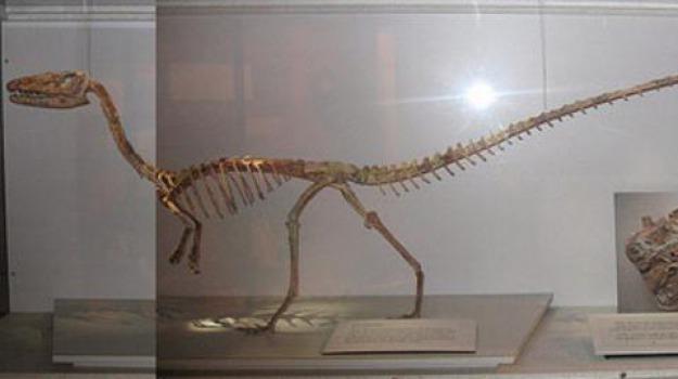 scheletro di dinosauro, università della calabria, Calabria, Archivio