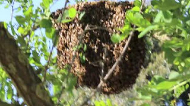 api scuola, lipari, Messina, Archivio