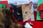 La gatta a due facce spopola sul web
