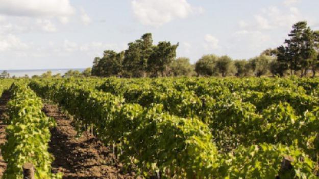 agricoltura biologica, Sicilia, Archivio
