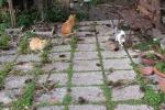 Isole Eolie, l'Enpa sterilizza 130 gatti randagi
