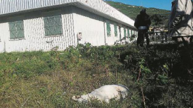 cani uccisi, Messina, Archivio