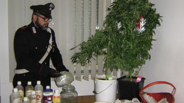 arrestato30enne, carabinieri, Coltiva marijuana, scicli, Sicilia, Archivio