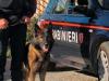 Reggio, giro di vite ad Arghillà per droga, armi e furto di energia