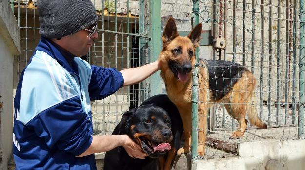 annona, cani, nitrati e nitriti, Messina, Archivio
