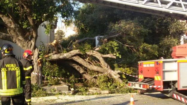 crollo albero, Messina, Archivio