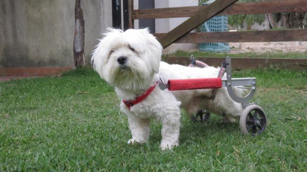 cane con le ruote, Sicilia, Archivio