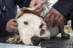 Bimbo sbranato dal cane la mamma: lo avevo in braccio