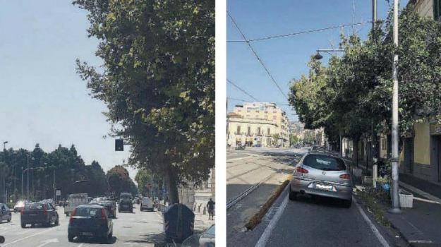 semafori nascosti, Messina, Archivio