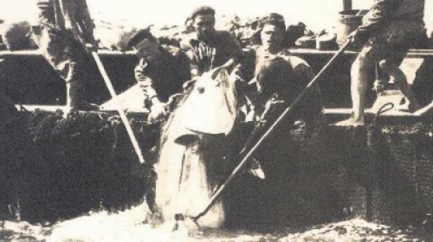mario sarica, messina, tonnare, Messina, Archivio