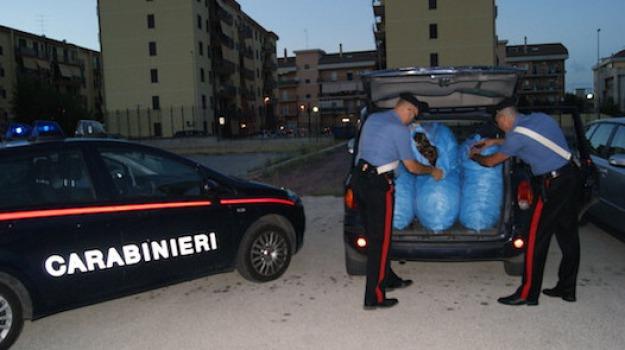 Furto carrube, modica, romeni arrestati, Sicilia, Archivio