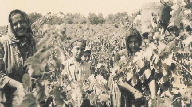 mario sarica, sicilia, vendemmia, Sicilia, Archivio
