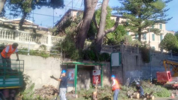 alberi, messina, Messina, Archivio