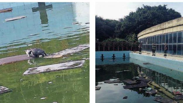 gatto cade in piscina, villa dante, Messina, Archivio