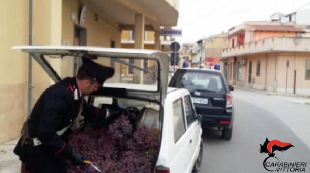 acate, Arresto gelese, furto uva, Sicilia, Archivio