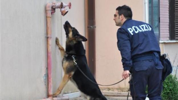 controlli antidroga polizia, marijuana e hascisc a scuola, ragusa, Sicilia, Archivio