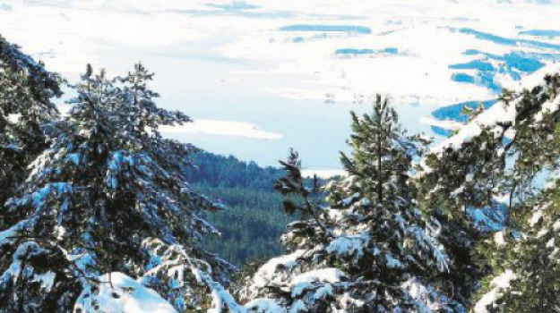 cosenza, neve, sila, Cosenza, Calabria, Cronaca