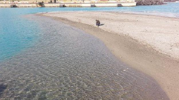approdi, approdi di Tremestieri, Comet, dragaggio, porto di messina, sabbia pulita, Salvatore Ciotto, Messina, Sicilia, Cronaca